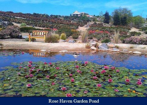 Conservation - Rose Garden Pond